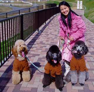 我が家のスタンダードプードルの子犬達の2006年の写真