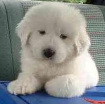 全国の優良なブリーダー様から、ご希望の子犬たちをお探し致しますので、お気軽にお問い合せ下さいませ。 今すぐ!子犬へのお問い合せはコチラから!